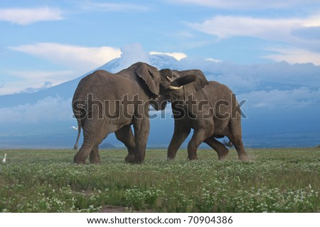 Fierce battle between two bull elephants in African national park