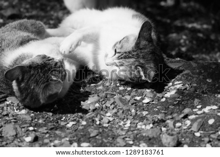 Fiery cats relaxing in spring sunshine #1289183761