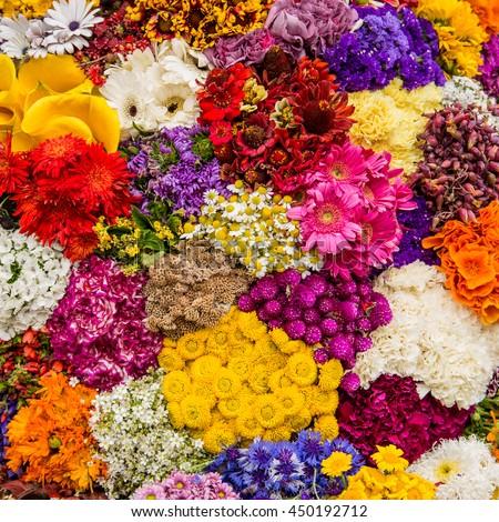 Shutterstock Fiesta de las Flores, silleta, Medellin Colombia