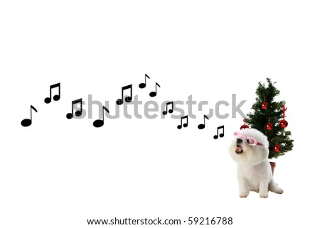 Fifi the Pure Bred Bichon Frise sings a song of love and Christmas and Holiday Cheer in front of her Christmas Tree isolated on white