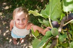 Fig  - girl picking of tree ripe figs