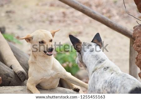 fight scene Dogs