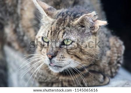 fighting cat, domestic cat #1145065616