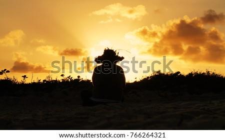 Figure of man sitting on beach sunset clouds flowers sand #766264321