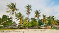 Filipino village with palm trees. Beach. Bohol Island. Philippines.