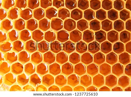Filled honeycomb as background. Healthy natural sweetener