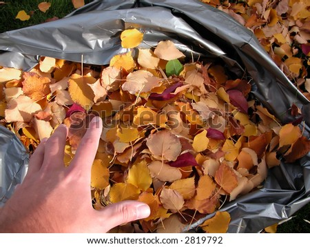 Filling a bag of leaves during a colorful autumn day