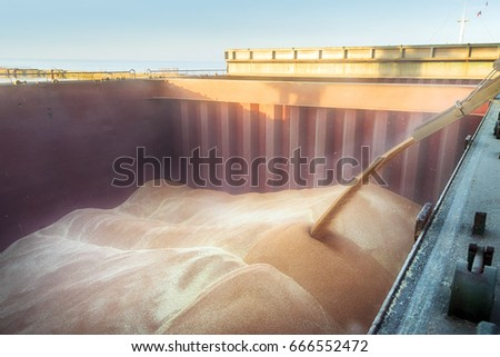 Filling the ship hold. The wheat in bulk.