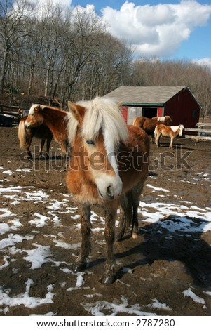 filly in foreground with other horses in background