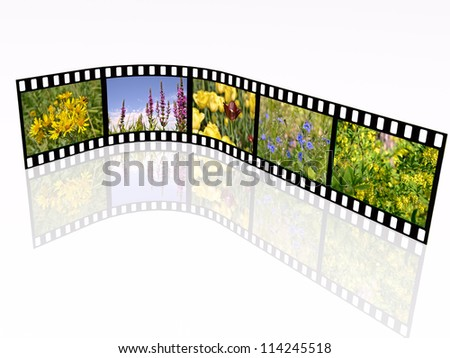 Film roll with color pictures (nature) on white background.