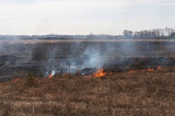 Filming burning and scorched dry fields. Dry grass is burning in the field, and after the fire, the ground is covered with black ash. The ruin of nature, the influence of man on the planet.
