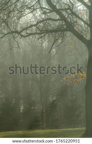 Filtered sun rays in a green, dense, hazy wood