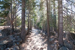 Filtered sunlight on the John Muir hiking trail in Yosemite National Park in California United States