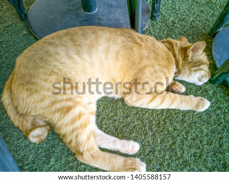 Find cat asleep Stock Images in HD and millions of other royalty-free stock photos, illustrations, and vectors in the Shutterstock collection. ... cat yawns close-up