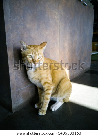 Find cat Stock Images in HD and millions of other royalty-free stock photos, illustrations, and vectors in the Shutterstock collection. ... cat yawns close-up