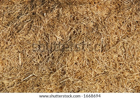 find the needle in a haystack