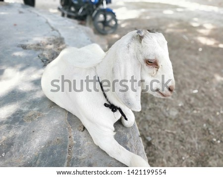 Find the perfect Goat stock photos and editorial news pictures from Getty Images. Download premium images you can't get anywhere else