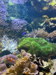 Finding Nemo real life dory and marlin