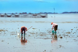 Finding shells in the sand. The livelihoods of coastal residents.