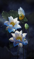Fine art - Beautiful white lotus flower and lotus flower plants, pure white lotus flower, symbol of VietNam.