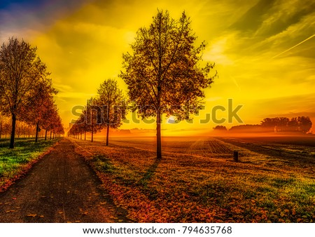 Fine art colorful scenic glorious autumn sunrise on an alley with a dramatic sky and a cycle path with leaves - seasonal impression in fantasy surrealistic painting style,alley towards the golden sun - Shutterstock ID 794635768