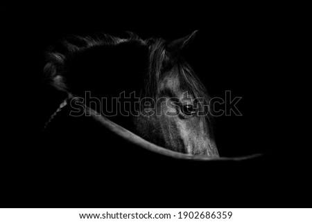 Fine art, low key horse pictures Сток-фото ©