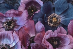 Fine art still life floral pastel color macro of a bouquet / bunch / collage of pink  and violet blue anemone blossoms with detailed texture in vintage painting style