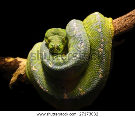 fine close up image of green snake wild animal background