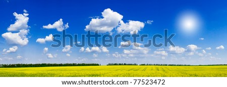 Fine panorama of rapeseed field and cloudscape.