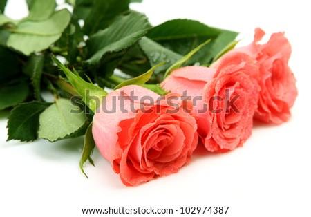 Fine pink roses