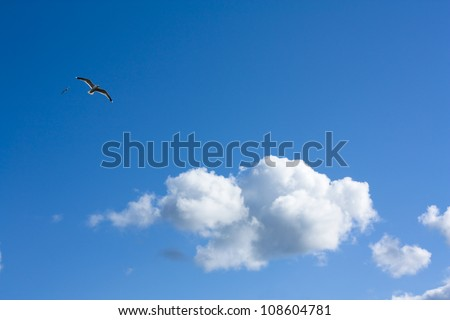 Fine weather, blue sky panorama with white clouds and a bird