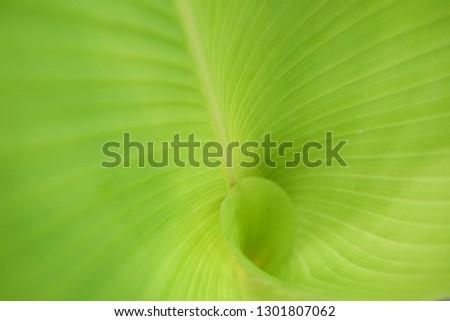 finger print of god in the green leaf #1301807062