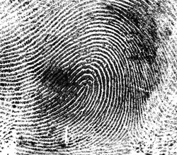 Fingerprint on white paper, as background