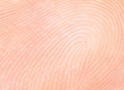 fingerprint, papillary lines