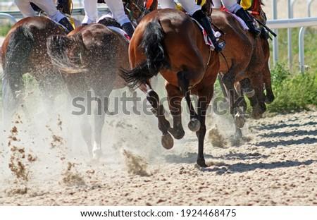 Finish horse race on hippodrome,Caucasus.
