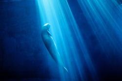Finless porpoise and aquarium