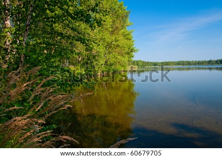 Finnish landscape: Lake and trees on the shore with reed
