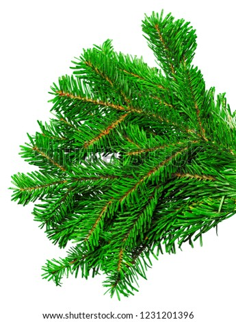 Fir branch isolated on white background #1231201396
