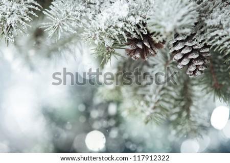 Fir branch on snow #117912322