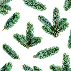 Fir branches Pattern. Pine branch, Christmas confier tree isolated on white background.