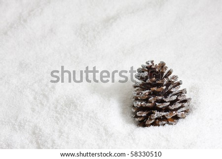 Fir cone on snow background - winter or christmas concept