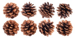 Fir cones isolated on white background closeup