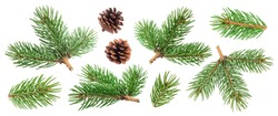 Fir tree branch and pine cone isolated on white background with clipping path