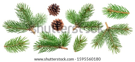 Photo of  Fir tree branch and pine cone isolated on white background with clipping path