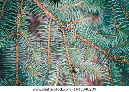 Fir tree branch close up. Spruce branches in the woods. Shallow focus. Fluffy fir tree branch close up. Christmas wallpaper concept. Copy space. #1433340209
