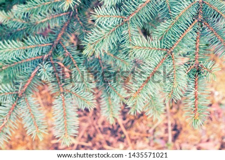 Fir tree branch close up. Spruce branches in the woods. Shallow focus. Fluffy fir tree branch close up. Christmas wallpaper concept. Copy space. #1435571021