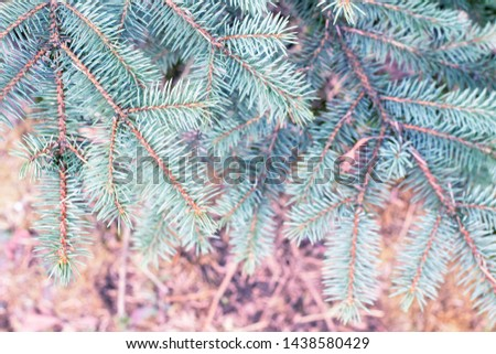 Fir tree branch close up. Spruce branches in the woods. Shallow focus. Fluffy fir tree branch close up. Christmas wallpaper concept. Copy space. #1438580429
