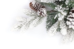 Fir tree branch covered with snow. Isolated on white background