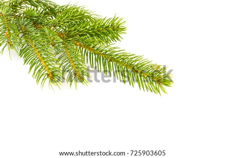 Fir tree branch isolated on a white background #725903605