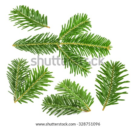 Fir tree branch isolated on white #328751096